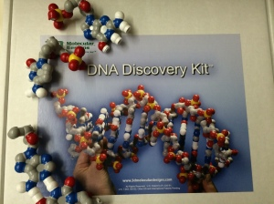 DNA model, more fun with magnets and plastic
